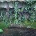 Source d'un ancien lavoir à Fages