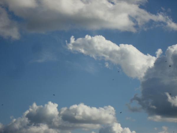 Ciel de nuages et d'hirondelles