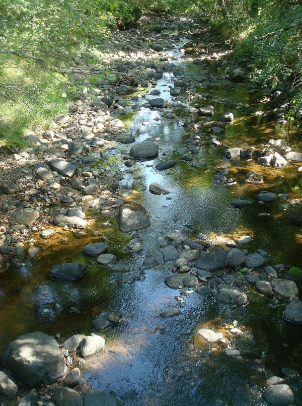 Couze d'Ardes - Sources d'Ardesy - Puy de Dôme