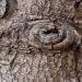 Les arbres ont des yeux III