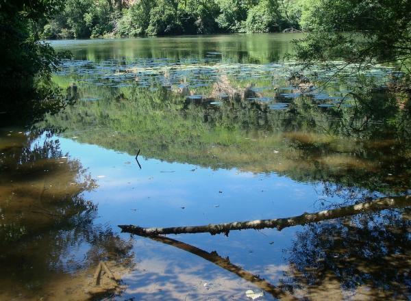 Le Lot, sortie du bayou