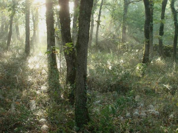 Magie des matins d'automne