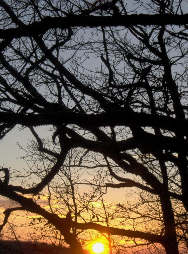 Crépuscule de février