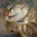 Se méfier du chat qui dort