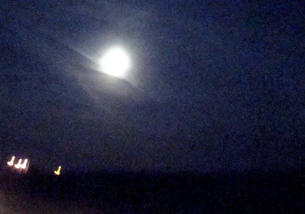 Des canards sous la lune