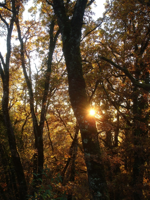 Lumière de novembre