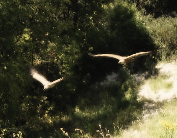 Rocher des Aigles - Rocamadour