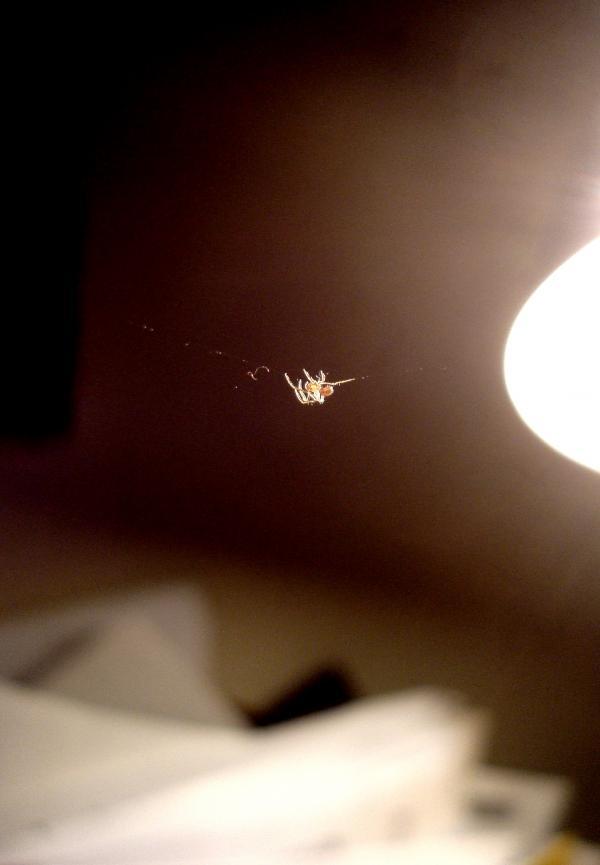 Micro-araignée de bureau