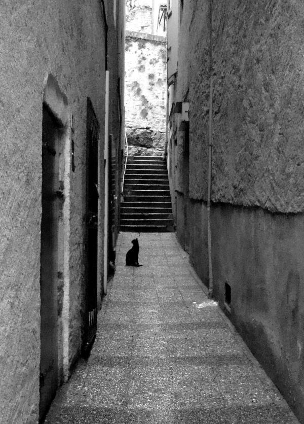 Chat de ruelle - Puy L'Evêque