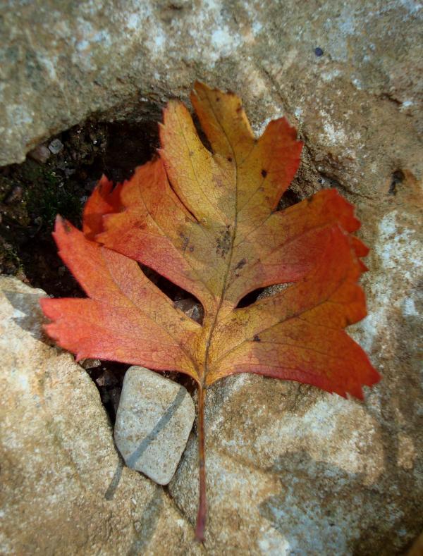Masque d'automne