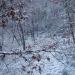 Neige de février