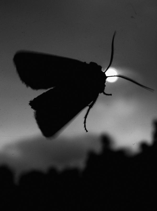 Visiteur de nuit