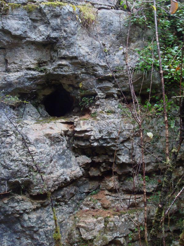 Cat's rock