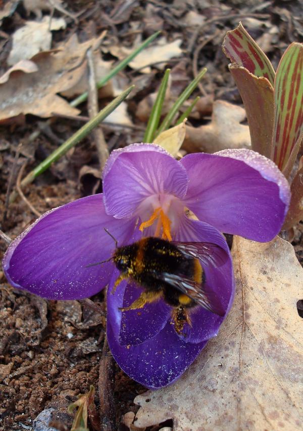 Première orgie de pollen
